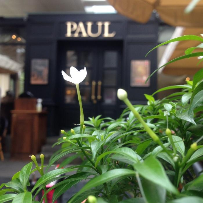 Paul Jakarta 12